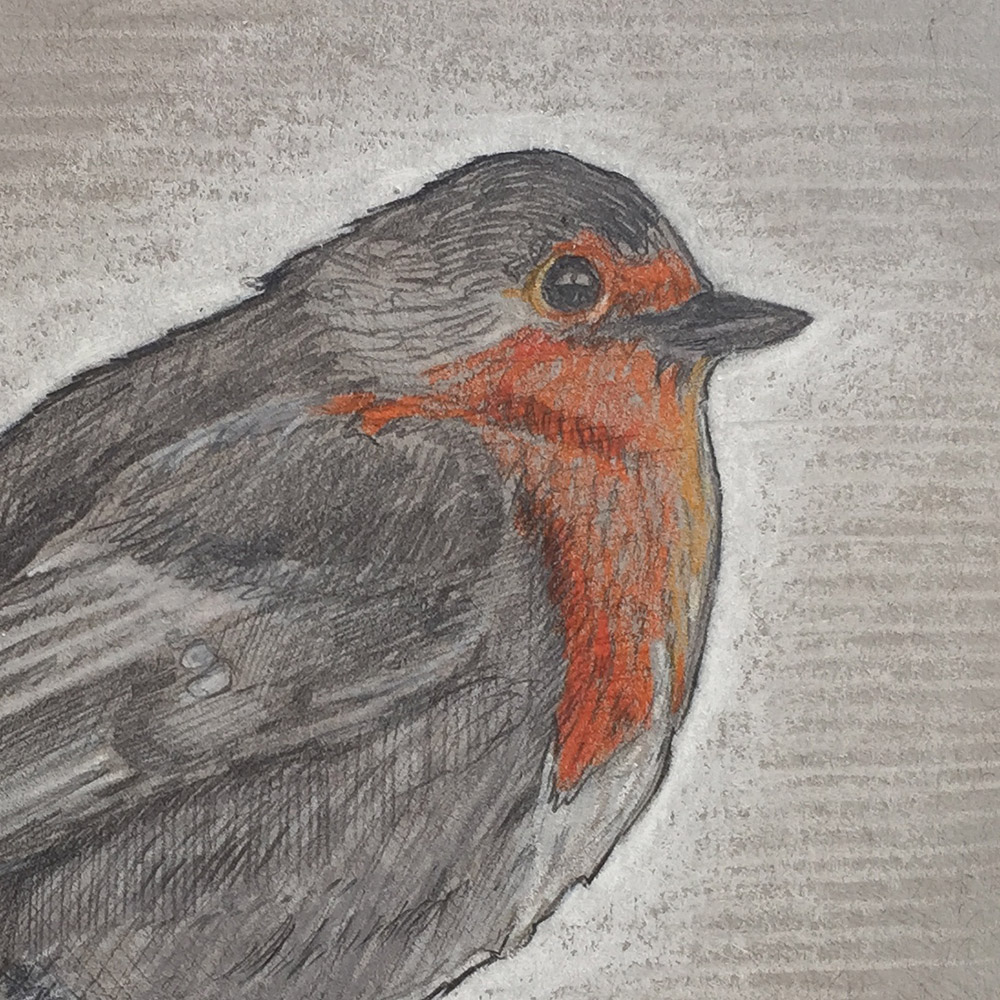 Bird Drawing Close-up
