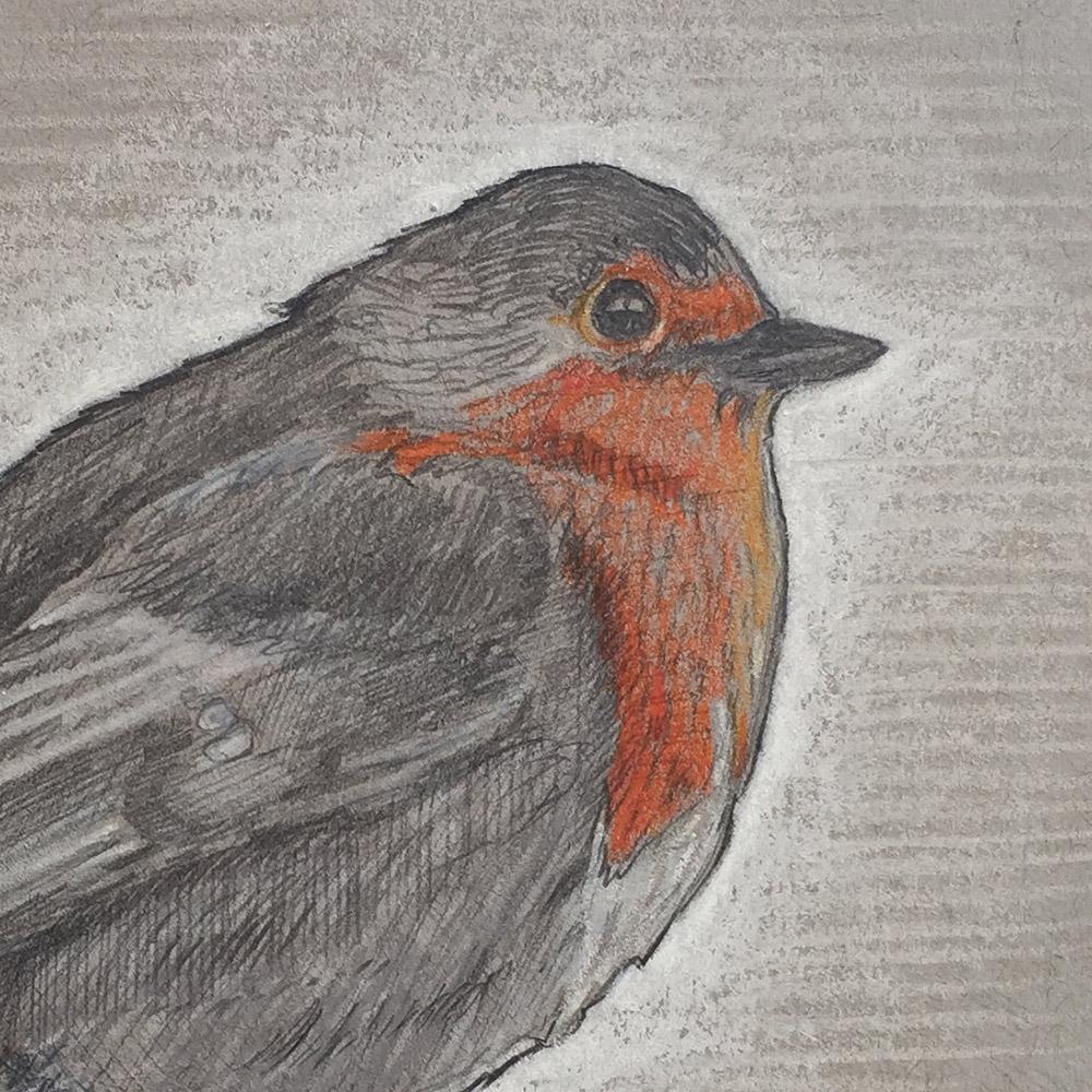 Bird Drawing Close-up